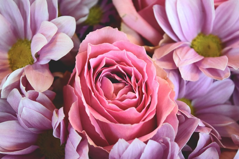 pink-flowers-roses-gift